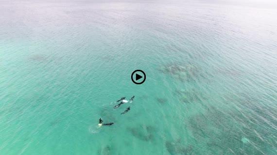 大浜海浜公園動画1