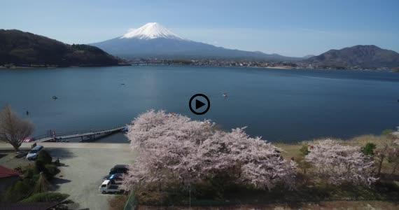 河口湖桜2-1